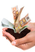 Growing money — Stock Photo
