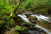 Killarney National Park creek — Stock Photo