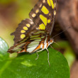 Yellow butterfly in the tropical jungle — Stockfoto