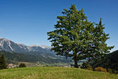 Mountain ladscape with one tree and bench, Austria — Stock Photo