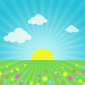 Sky, sun, flowers and grass — Stock Photo