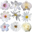 Flower heads collection isolated on white — Stockfoto