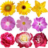 Flower collection isolated on white background — Stock Photo