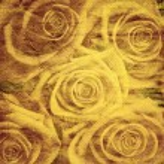 Vintage romantisk bakgrund med rosor — Stockfoto
