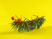 Kids crafts of fir branches, the caterpillars — Stock Photo