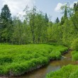 Environmentally-friendly summer landscape, Russia — Photo