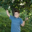 Portrait of a boy on a background of green apples with apples — Stock Photo