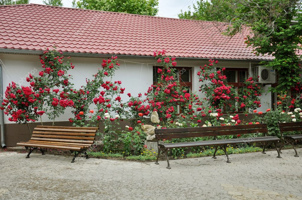 Beautiful red roses in front of the house landscape for Red house garden design