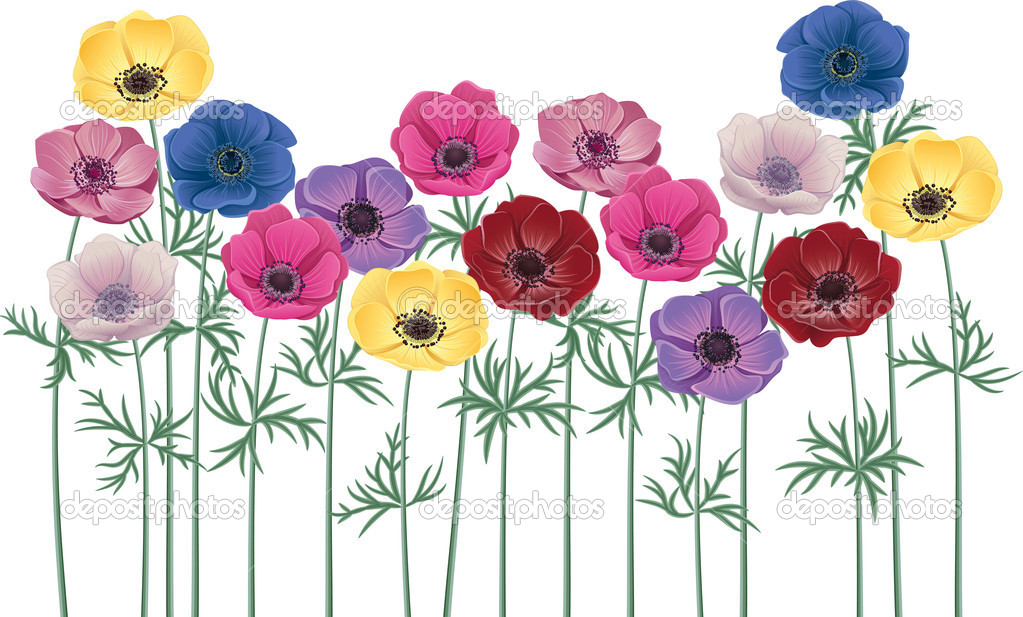 Anemones - group of flowers isolated over white background — Stock Vector #7453321
