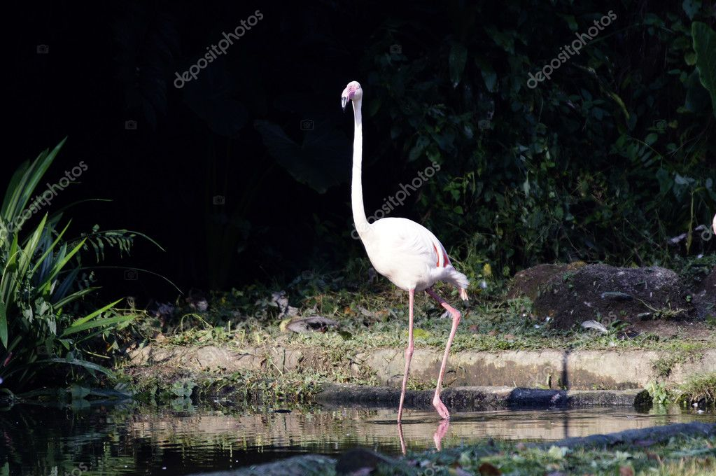 Pink flamingos — Stock Photo #6955376