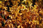 Paradise butterflies. Orchids of Borneo. — Stockfoto