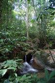 Yağmur ormanlarında şelaleler — Stok fotoğraf
