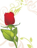 Red rose on the decorative background — Stock Vector