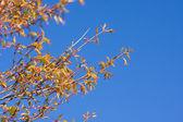 树上的天空 — Stockfoto