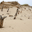 Tree trunks destroyed by sand — Stock Photo