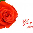 Stock Photo: Red rose with space for text