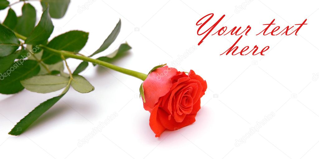 Red rose isolated on white with space for text — Stock Photo #6863122