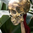 Human Skull of Victim — Stock Photo