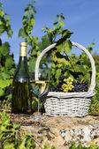 Harvest and wine — Stock Photo