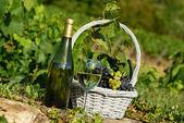Oogst en wijn — Stockfoto