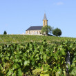 Stock Photo: French country and vineyards