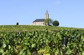 Franska land och vingårdar — Stockfoto