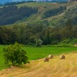 Italian countryside with hay rolls — Stock Photo
