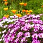 ljusa mångfärgade blomsterrabatt — Stockfoto