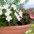 Multicolored flower pot — Stock Photo