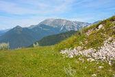 Beautiful landcape of the alps — Stock Photo