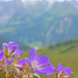 Small violet flowers — Stock Photo #6886388
