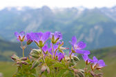 Small violet flowers — Stock Photo