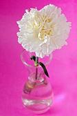 White carnation flower — Stock Photo