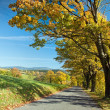 Road through the autumn landscape — Stock Photo