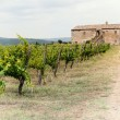 Tuscany vineyard — Stock Photo #7685557