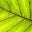 Green and yellow  leaf — Stock Photo