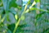 Dewy Spider Web — Stock Photo