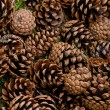 Pinecones on the ground — Stock Photo