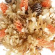 Stock Photo: Dried flowers