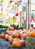 Pumpkins piled up in colorful display — Stock Photo
