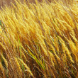 Autumn grass on city suburb. — Stock Photo