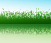 Green grass with reflection — Stock Vector