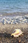 Sea shell — Foto Stock