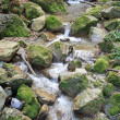 Small stream — Stock Photo