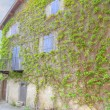 House wall with vines — Stock Photo