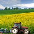 tractor in canola field — Stock Photo
