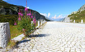 Deserted cobble stone road — Stockfoto