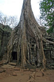 Ta Phrom temple overgrown by giant tree roots — Foto de Stock