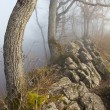 Hiking trail with mist on ridge — Stock Photo #7164543