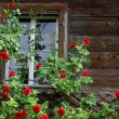 Old house entwined by red roses — Stock Photo